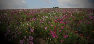 Préservation et mise en valeur des terroirs, de la biodiversité et des paysages