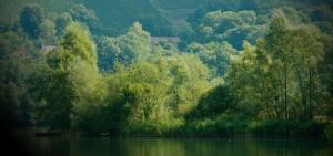 Gestion responsable de l'eau, des effluents, des sous-produits et des déchets