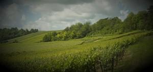 Terroir vitivinicole